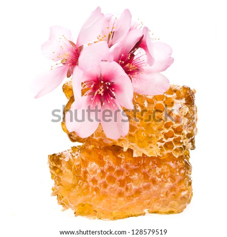 Yellow honeycomb slice and almond blossoms  closeup isolated  on white background - stock photo