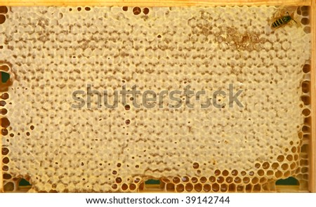 Yellow honeycomb wax cell detail texture background - stock photo