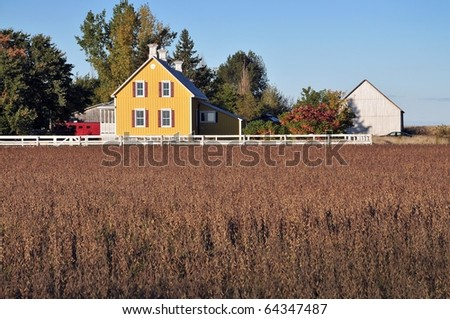 Yellow house in farm  and soy beans field - stock photo