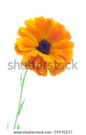 Yellow isolated flower over white background