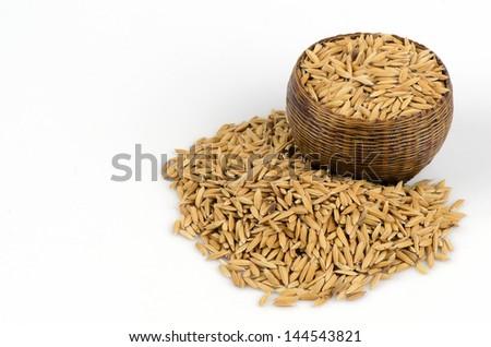 yellow jasmin ripe rice on white background - stock photo