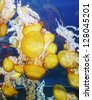 yellow jellyfish with blue ocean water - stock photo