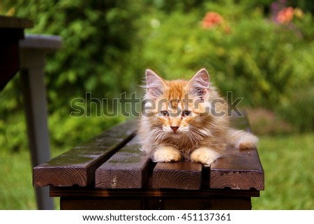 Yellow kitten on a bench