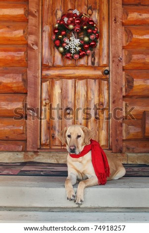 yellow lab sitting on cabin porch during holidays - stock photo