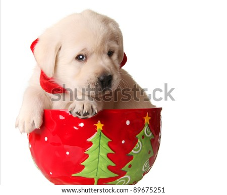 Yellow labrador puppy in a christmas mug. - stock photo