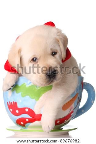 Yellow labrador puppy in a christmas mug. - stock photo