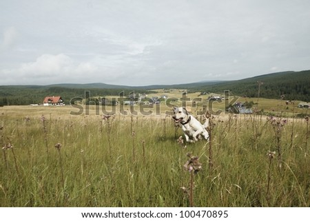 Yellow labrador retriever is running on meadow - selective focus - blurred motion - stock photo