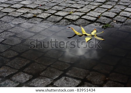Yellow leaf floating in a water puddle after some heavy rain. The reflection of a cloud can still be seen on the water. - stock photo