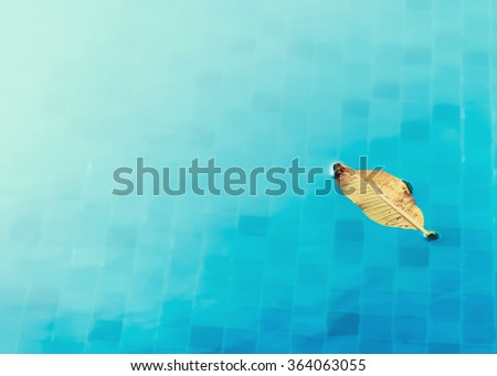 yellow leaf floating in swimming pool