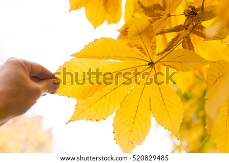 yellow leaf in hand on nature in autumn