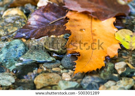 yellow leaf in river