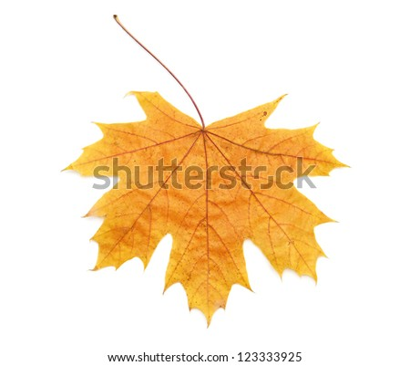 Yellow leaf isolated on white background - stock photo