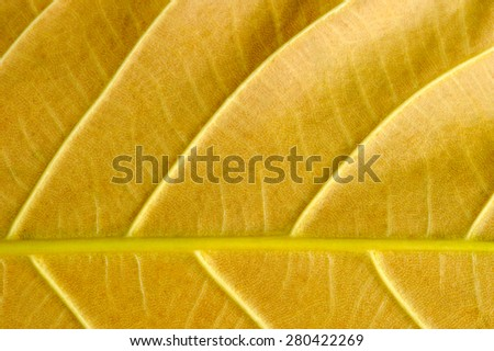 Yellow leaf macro. - stock photo