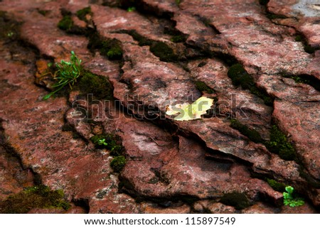Yellow Leaf on Terraced Rock - stock photo