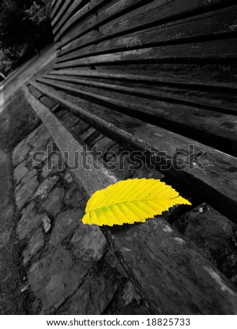 yellow leaf on the bench