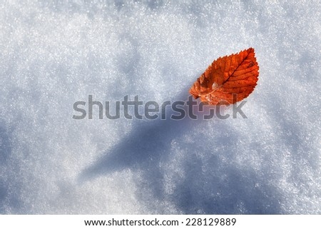 Yellow leaf on the snow. - stock photo