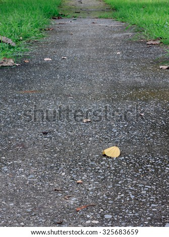 yellow leaf on walkway background. - stock photo