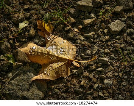 Yellow leaf with water drops on little rock - stock photo
