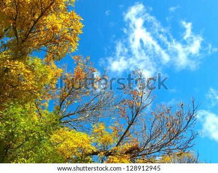 Yellow leafs in fall - stock photo