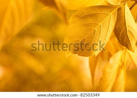 yellow leaves - stock photo