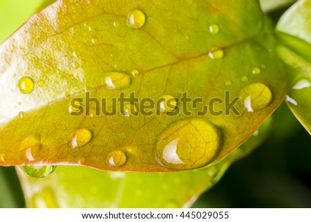 yellow leaves and water  drops detail. - stock photo