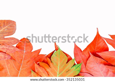yellow leaves autumn leaf on isolated background