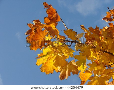 Yellow leaves in the sky - stock photo