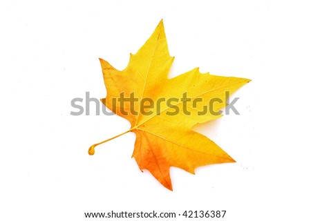 Yellow leaves isolated on white