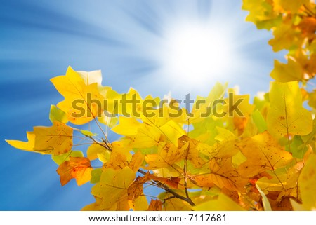 Yellow leaves on a background of the solar sky - stock photo