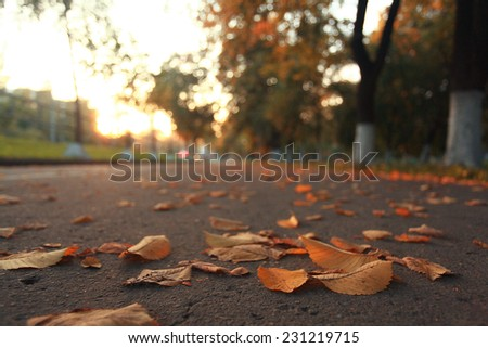 yellow leaves on an asphalt blurred urban background autumn - stock photo