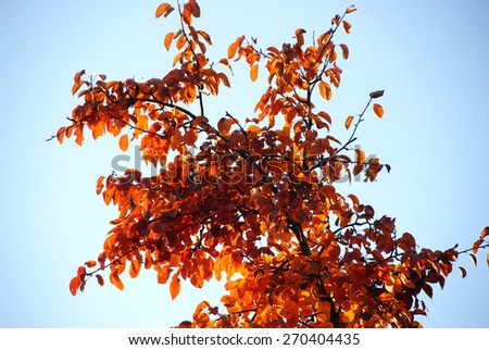 Yellow leaves on blue branch bright background - stock photo