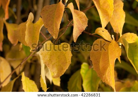 Yellow leaves on tee in spring