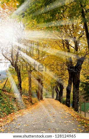 yellow leaves on the road in october - stock photo