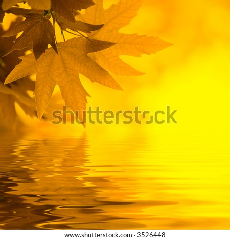 yellow leaves reflecting in the water, shallow focus - stock photo