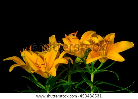 Yellow lilies on a black background