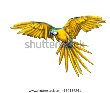 Yellow macaw parrot painting isolated. - stock photo