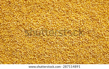 Yellow millet grains as an abstract background texture - stock photo
