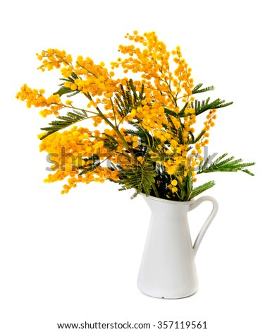 Yellow Mimosa bouquet in a vase isolated on a white - stock photo