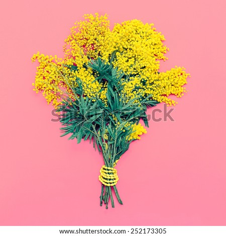 Yellow Mimosa bouquet on pink background, the symbol of International Women's Day. - stock photo