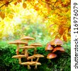 Yellow mushrooms in sunny autumn forest - stock photo