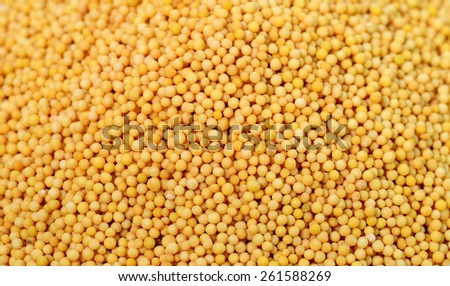 Yellow mustard seeds as background