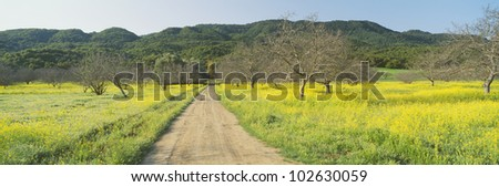Yellow Mustard, Upper Ojai, California - stock photo