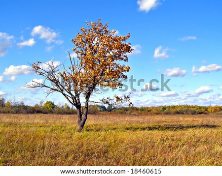 yellow oak on field
