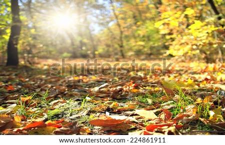 Yellow, orange autumn leaves in beautiful fall park - stock photo