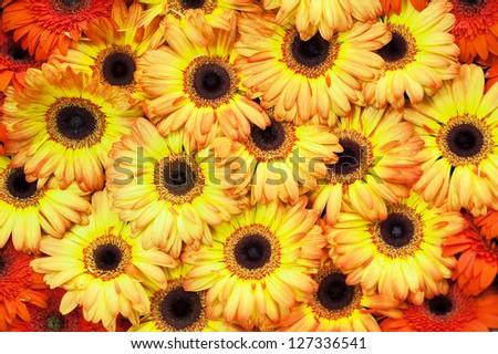 Yellow orange flowers texture - stock photo