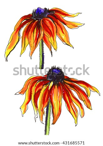 Yellow orange rudbeckia flower in blossom. Hand drawn decorative watercolor tropical flowers isolated on white background. Botanical illustration set for wedding printing products, card, invitation. - stock photo