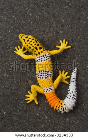 Yellow/orange/white lizard on a black tile shot from above. Focus on reptile. Contrast between background and lizard.