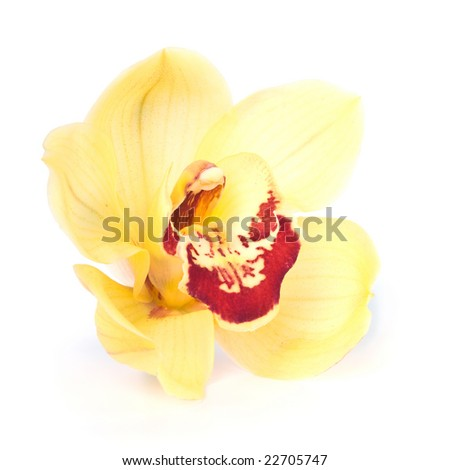 Yellow Orchid close up. Isolated over white - stock photo