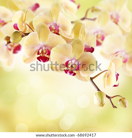 Yellow orchid on a light background - stock photo