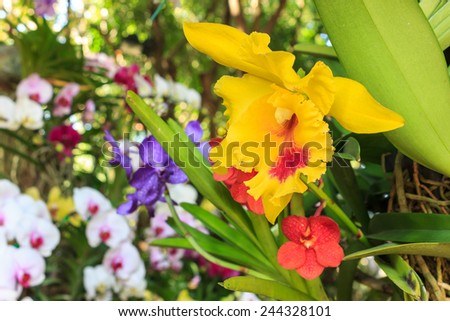 yellow orchid on tree - stock photo